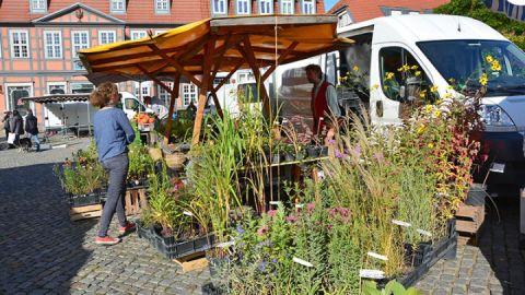 Grüner Markt Waren (Müritz)