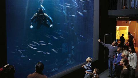 Müritzeum Aquarium